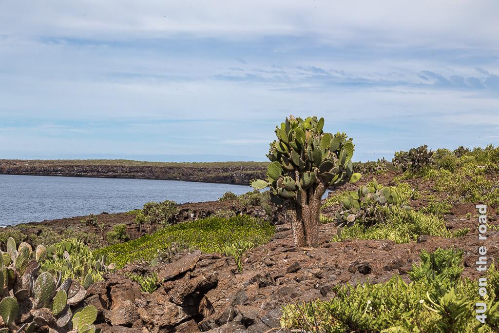 Darwinbucht - Reisebericht Galápagos Kreuzfahrt