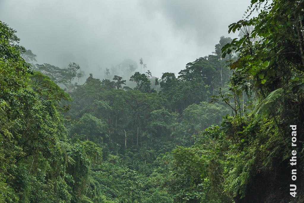 Der Nebelwald oder Cloud Forest macht seinem Namen alle Ehre