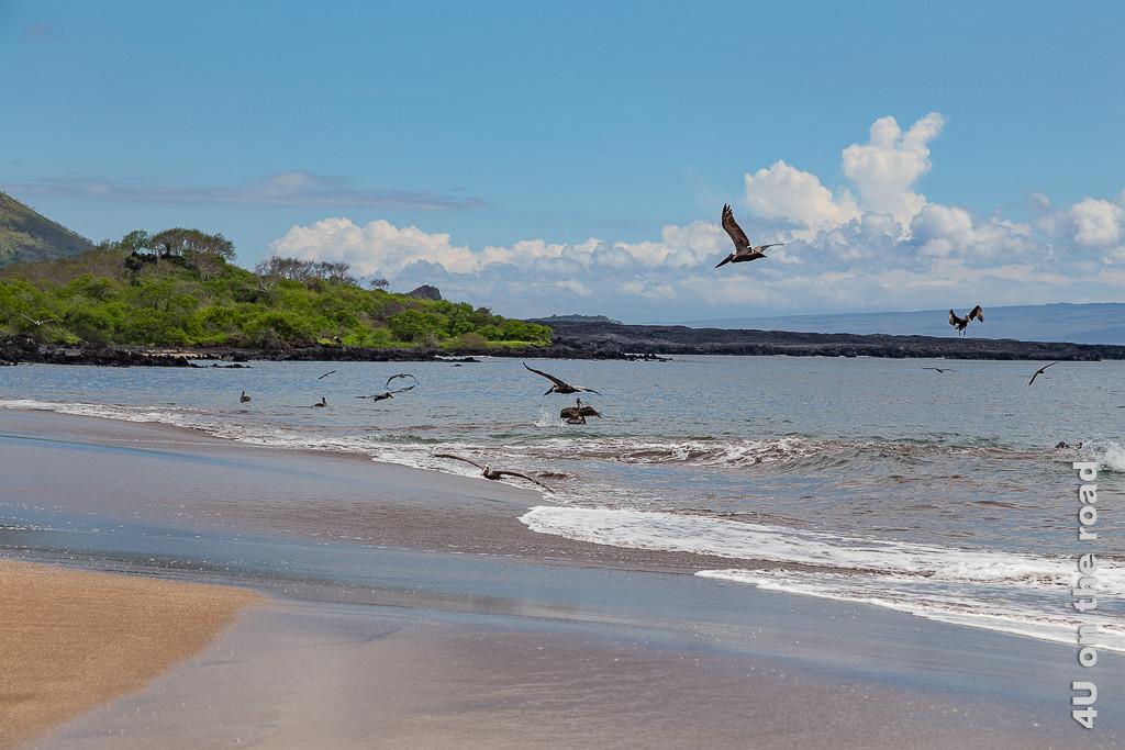 Espumilla Beach - Pelikana beim Fischfang