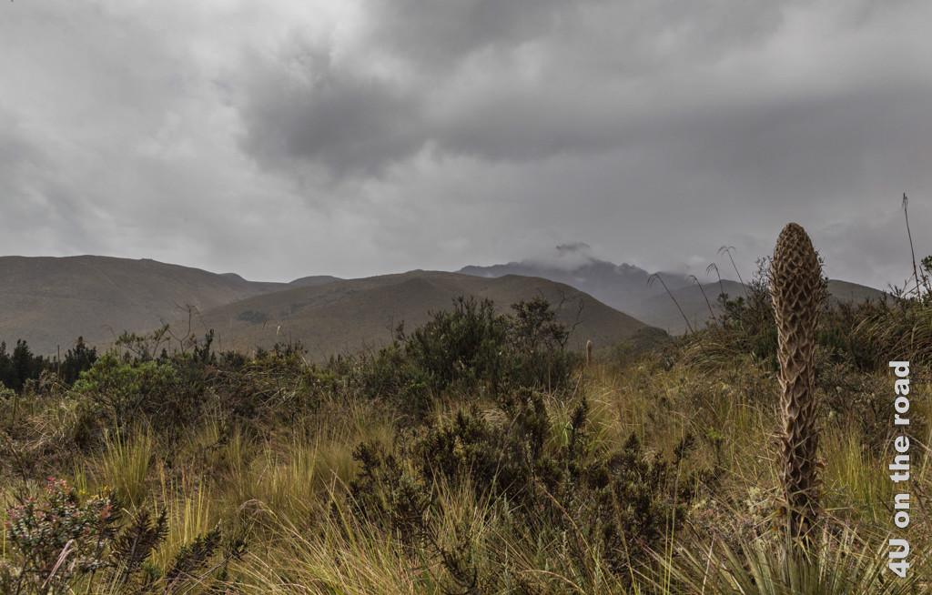 Landschaft und Pflanzen am Visitor Center im Cotopaxi Nationalpark