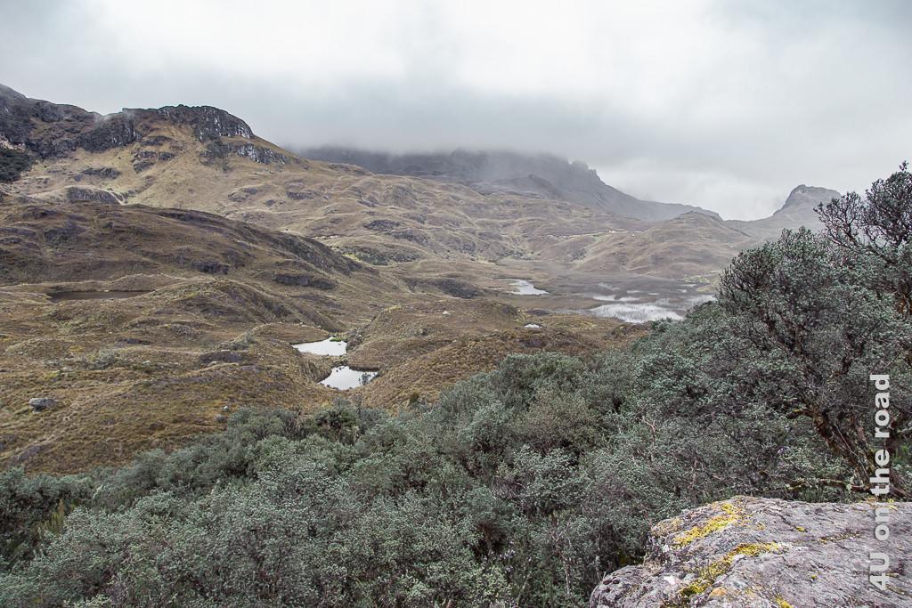 Der Polylepis Wald schmiegt sich an einen Hang - Cajas NP