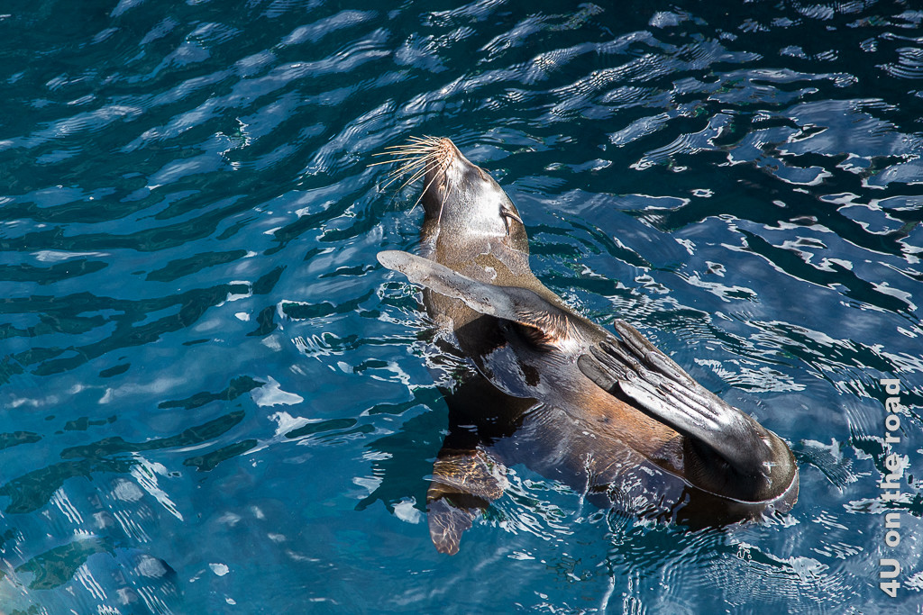 Ausbalancierte Schlagseite - Reisebericht Galápagos Kreuzfahrt