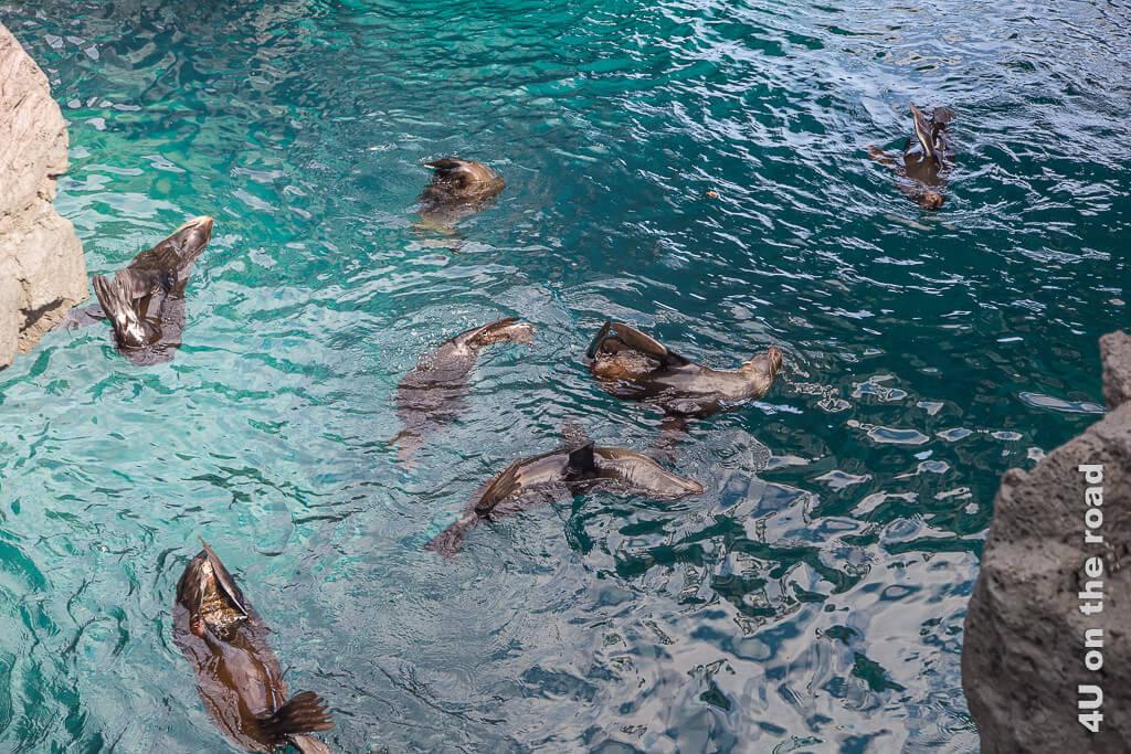 Ballettaufführung der schlafenden Seebären - Reisebericht Galápagos Kreuzfahrt