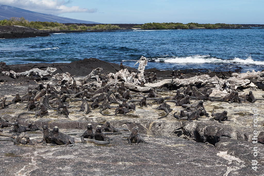 Sonnenanbeter - Reisebericht Galápagos Kreuzfahrt