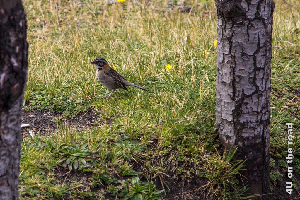 Dieser Vogel an der Laguna Limpiopungo könnte ein Fink sein