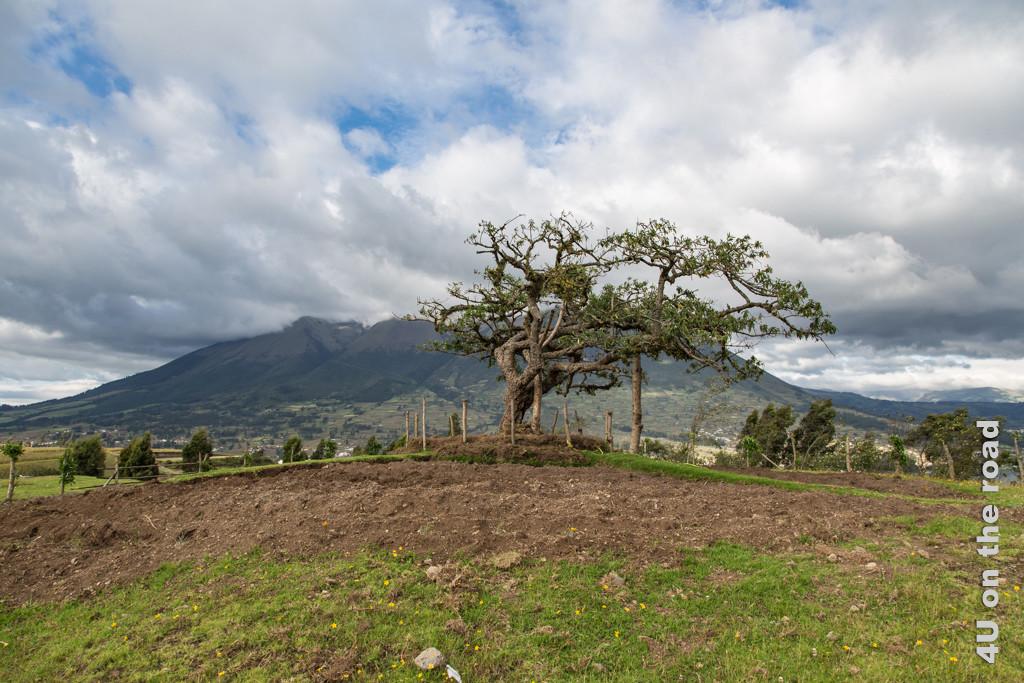 El Lechero - die bevorzugte Windrichtung ist gut zu erkennen