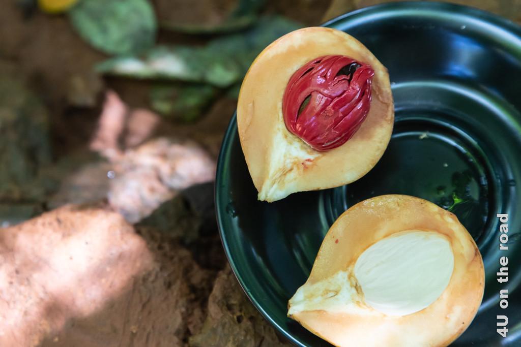 Aufgeschnittene Muskatnuss. Um Schimmelpilze zu vermeiden, nur ganze Muskatnüsse kaufen, dann sieht man Schimmel. Gewürze in Matale
