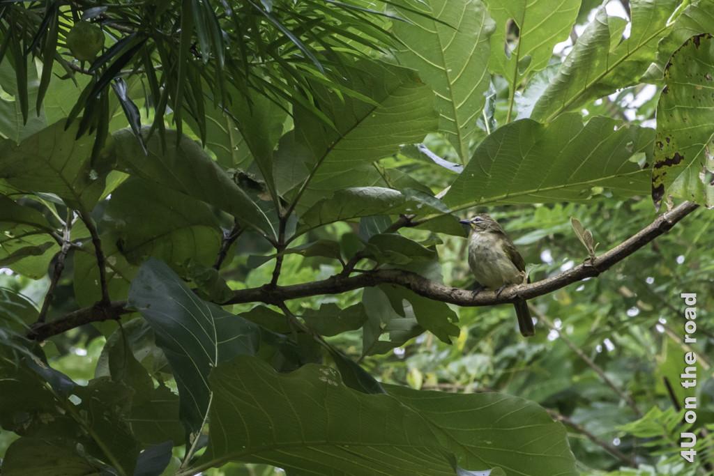 Vogel unterm Blätterdach - Vogelbeobachtung Hotel Nice Place