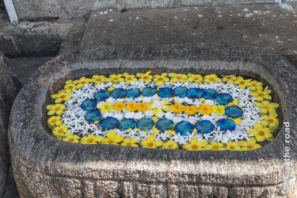 Mit Blüten geschmücktes Wasserbecken im Dambulla Höhlentempel
