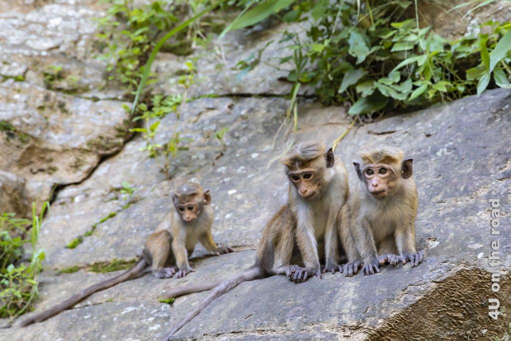 Die Affenkinder bei den Ravana Falls beobachten von oben alles genau.
