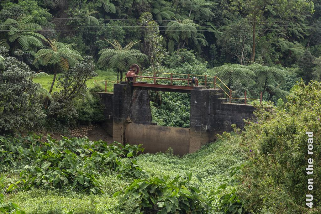 Ein Stauwehr in üppiger Natur mit schönen Baumfarnen - Mit dem Zug von Nuwara Eliya nach Ella