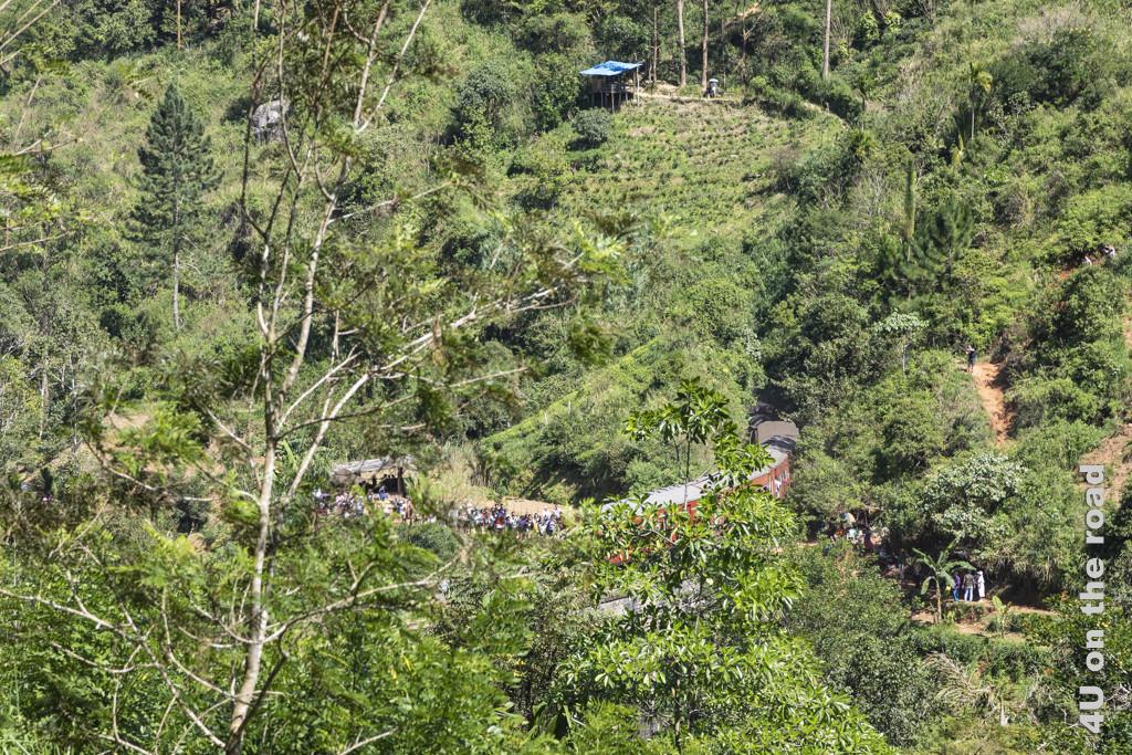 Blick durch die Vegetation auf den Zug auf der Nine Arches Bridge