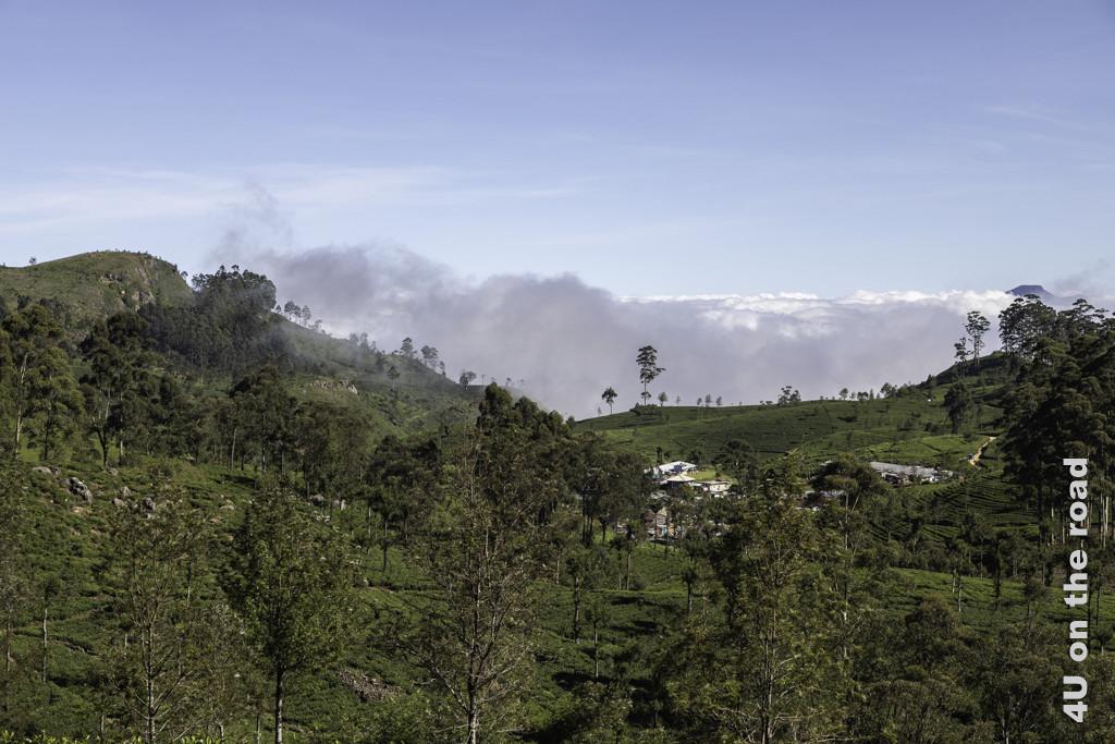Dorf in einem Meer aus Teefeldern