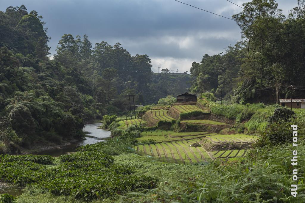 Gemüseanbau neben dem Fluss - Zugfahrt Nuwara Eliya - Ella