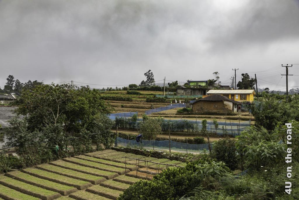 Gemüsebeete vor den Häusern - Mit dem Zug von Nuwara Eliya nach Ella