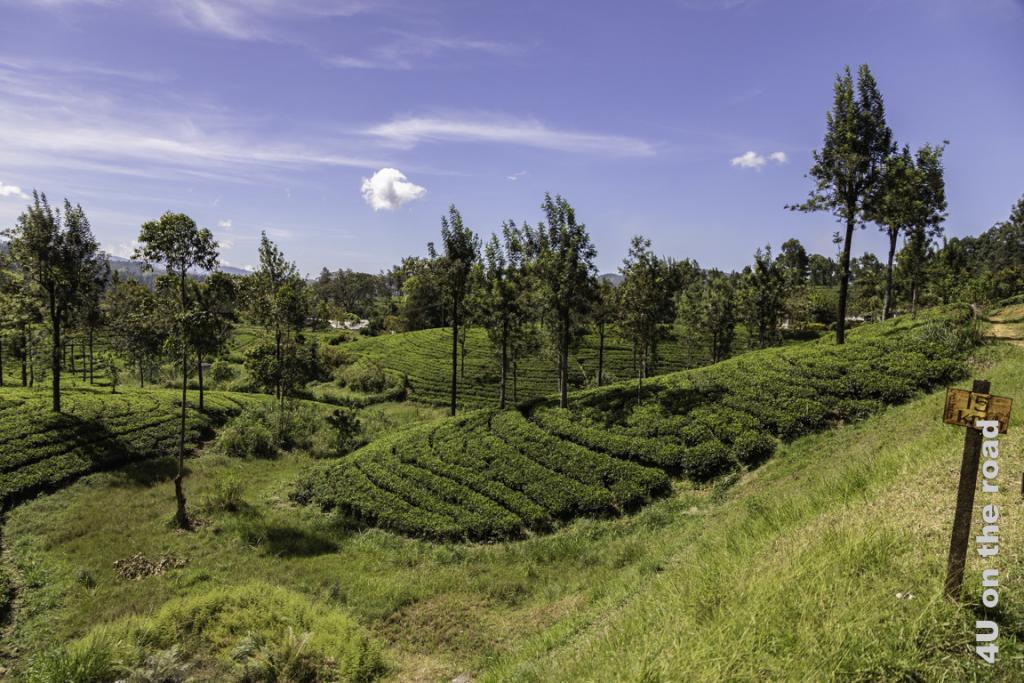 Geschwindigkeitsbegrenzung auf 15 km/h - es wäre auch wirklich schade an dieser Landschaft vorbeizueilen. Zugfahrt von Kandy nach Nuwara Eliya