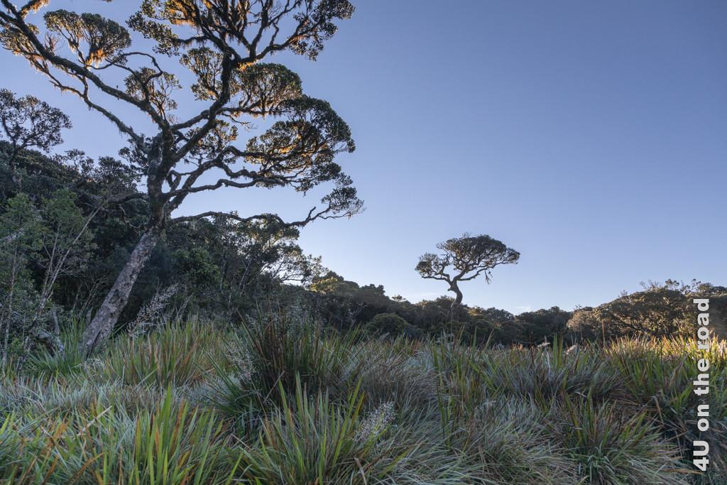 Lichtstimmung am frühen Morgen im Horton Plains Nationalpark