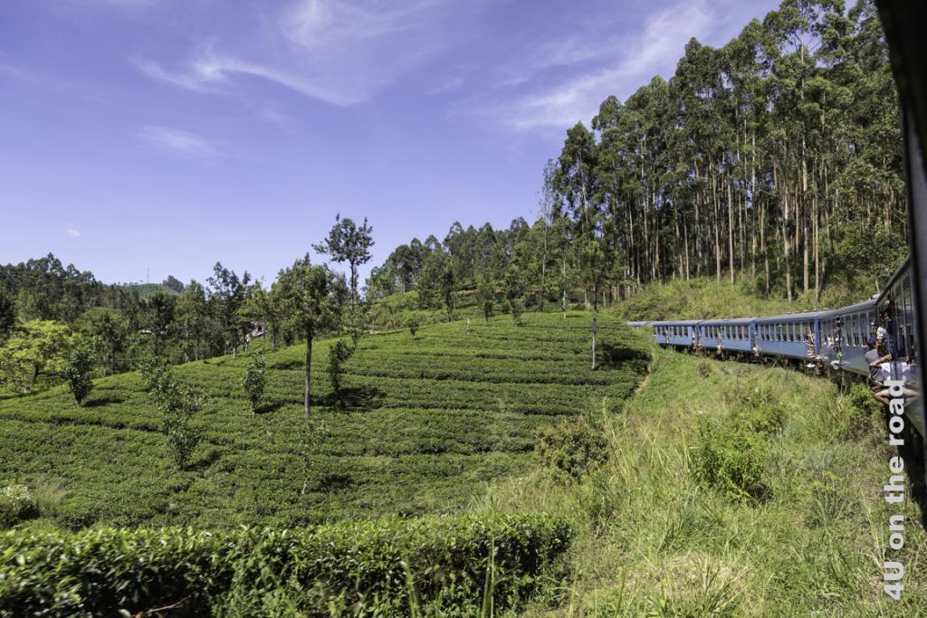 Vor allem junge Männer hängen aus dem Zug heraus - Zugfahrt von Kandy nach Nuwara Eliya
