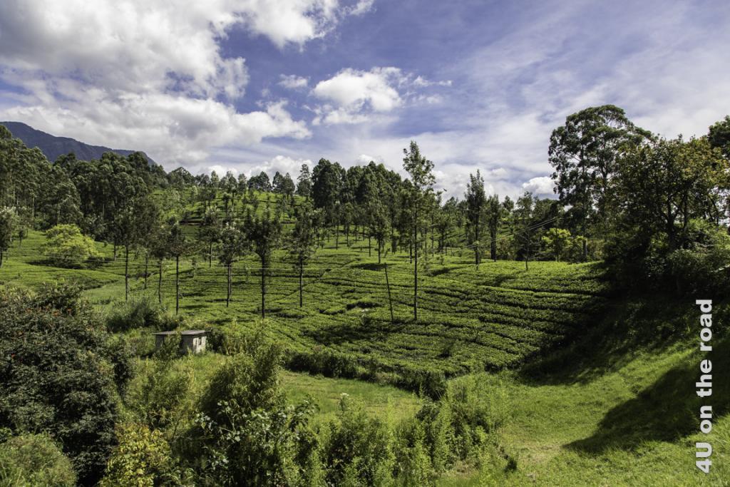 Tee soweit das Auge reicht - Zugfahrt von Kandy nach Nuwara Eliya