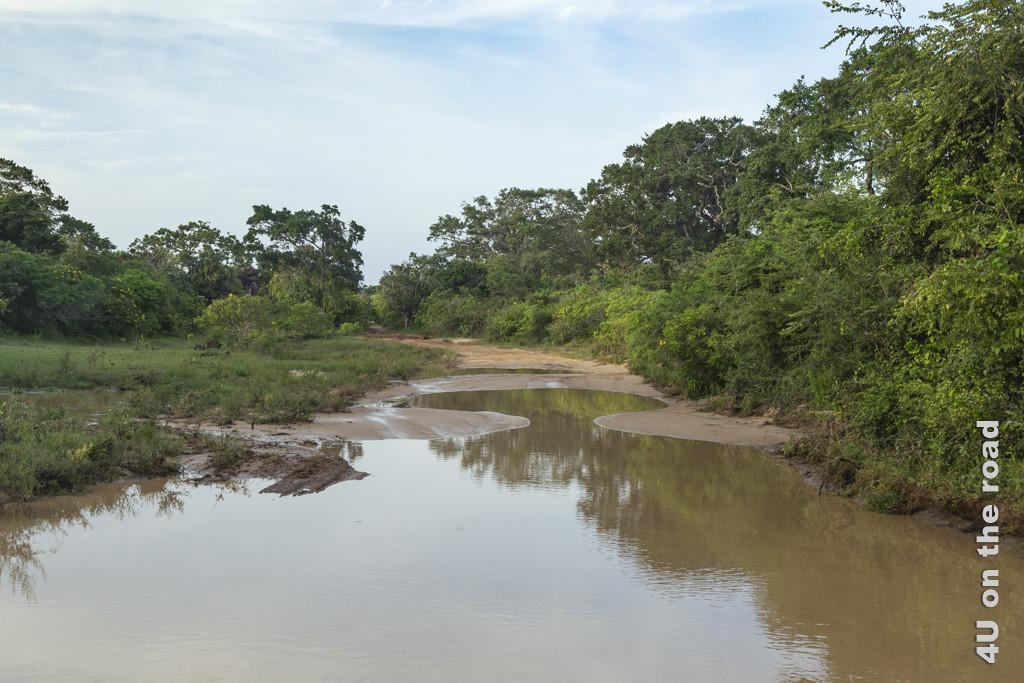 Das Wasser steht nur ca. 10 cm tief - Yala Nationalpark