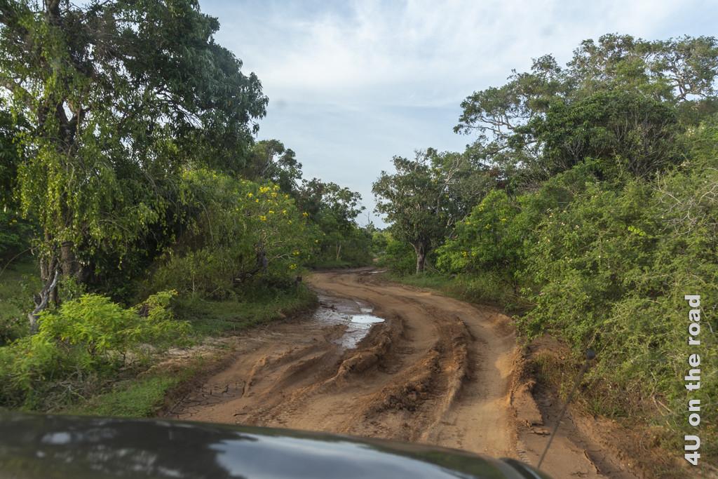 Hier ist der Matsch schon getrocknet und hat tiefe Spuren hinterlassen - Yala Nationalpark