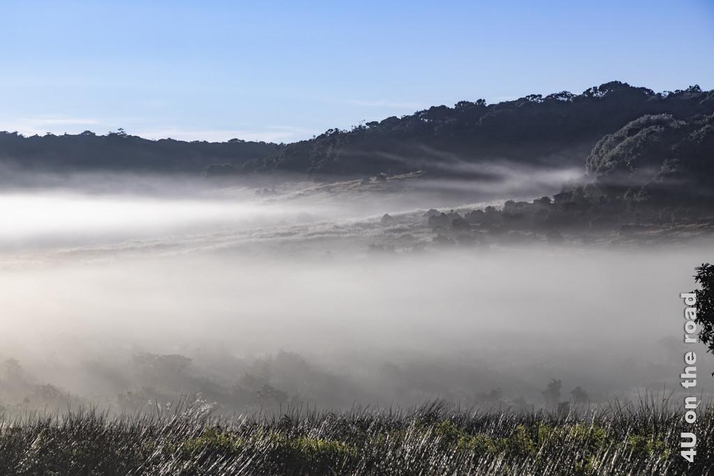 Zauberwelt im Nebel verborgen - Horton Plains Nationalpark