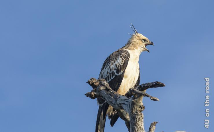 Feature Bundala Nationalpark