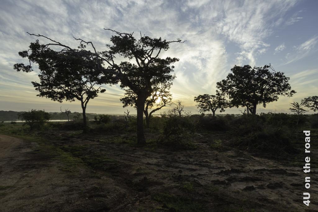 Morgenstimmung im Bundala Nationalpark