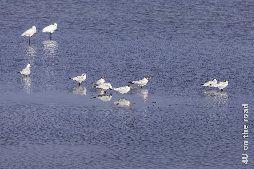 Seevögel - Bundala Nationalpark