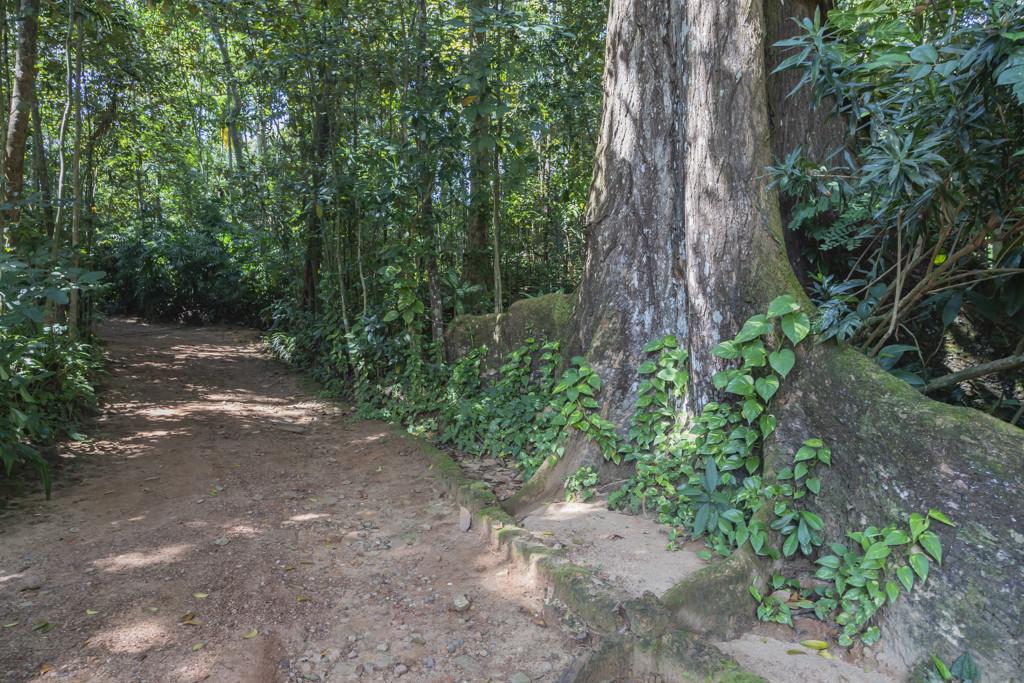 Weg durch den Dschungel zum Geoffrey Bawa Haus - Lunuganga