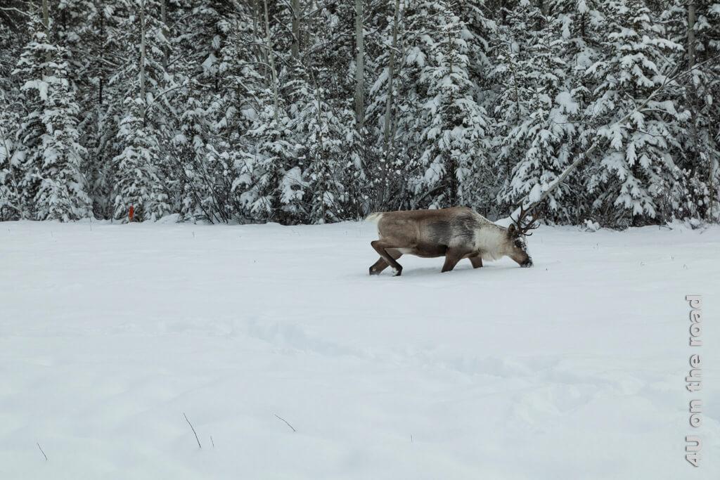 Das Laufen im tiefen Schnee sieht anstrengend aus.