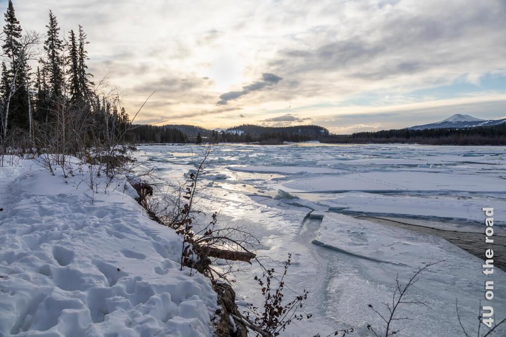 Lichtstimmung am Yukon - Millennium Trail Whitehorse
