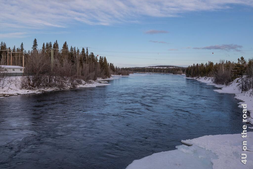 Nach dem Wasserkraftwerk ist der Yukon eisfrei und die Strömung stark - Millennium Trail Whitehorse