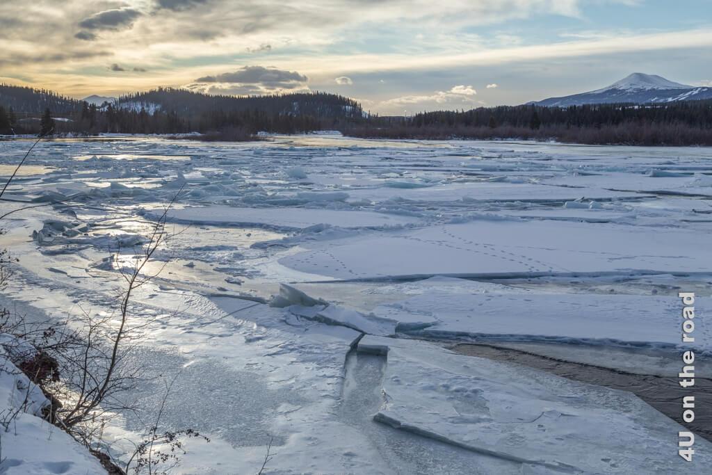 Tierspuren auf dem Eis des Yukon - Millennium Trail Whitehorse