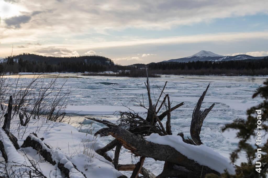 Der Yukon im Winter bei Whitehorse