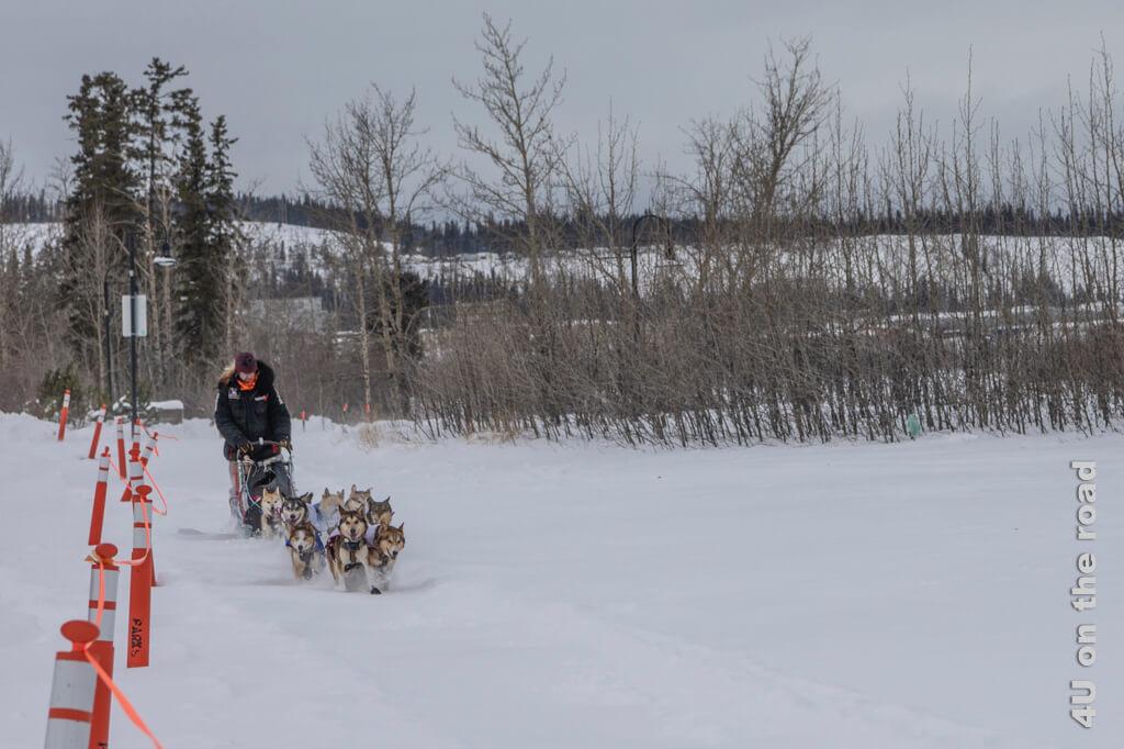 Nur noch wenige Meter trennen Allen Moore vom Ziel des Yukon Quest 2020 in Whitehorse