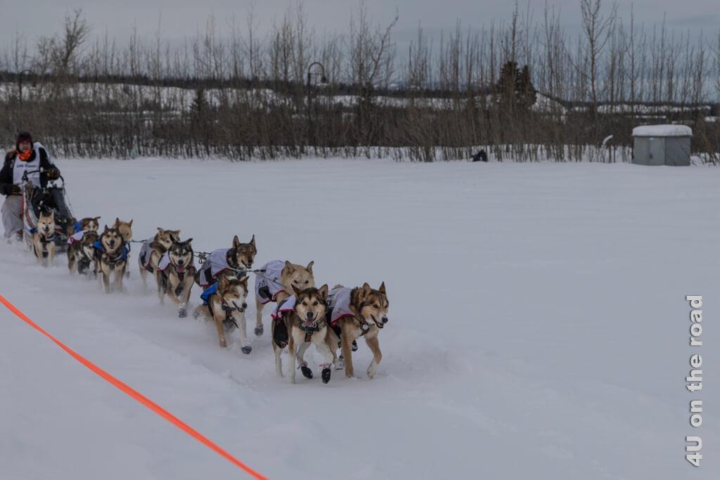 Zieleinlauf von Allen Moore in Whitehorse beim Yukon Quest