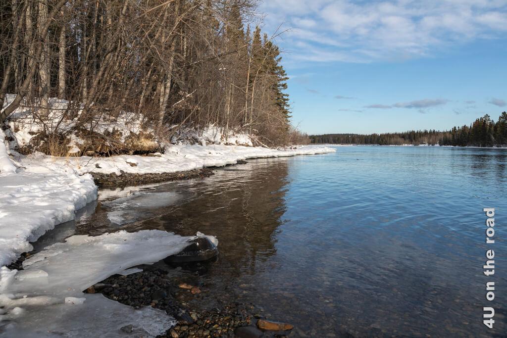 Am Ufer des Yukon - Millennium Trail Whitehorse