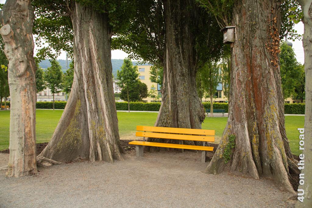 Eingerahmt von Stämmen alter Bäume - Rorschach
