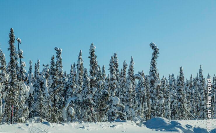 Feature von Dawson City nach Whitehorse