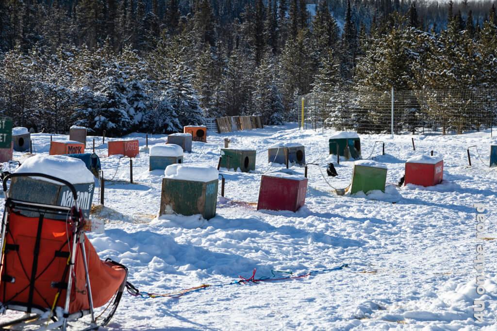 """In diesen Hütten wohnen nur Huskies, die als Schlittenhunde arbeiten. Die """"Rentner"""" dürfen frei herumlaufen, wenn sie sich mit ihren Artgenossen verstehen oder leben in Zwingern."""
