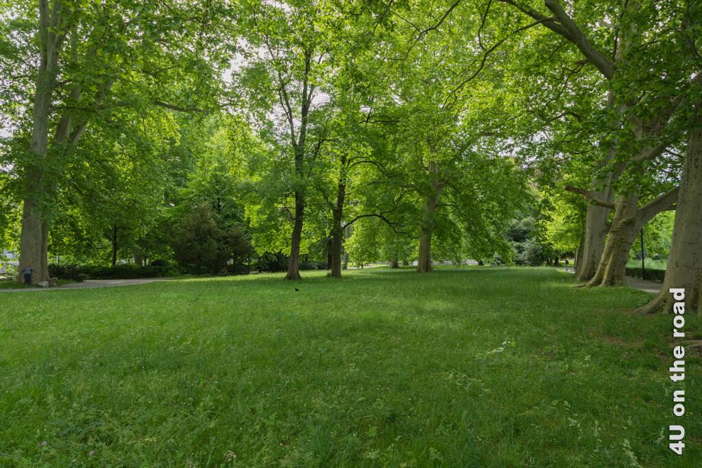 Platzspitz-Stadtpark mit grossen Platanen, die ihre Blätter fast ins Wasser hängen - Entlang der Limmat
