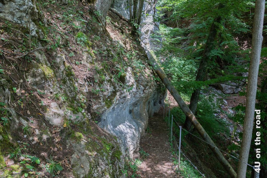 Wie sich die Bäume wohl auf dem Kalkstein festhalten können? - Wanderweg von Betlis nach Quinten