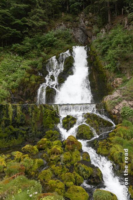 Der Moosbewuchs im unteren Teil des Wasserfalls von Jaun fasziniert mich.