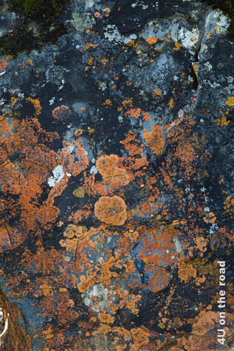 Flechten an Steinen lassen fantasievolle Bilder entstehen