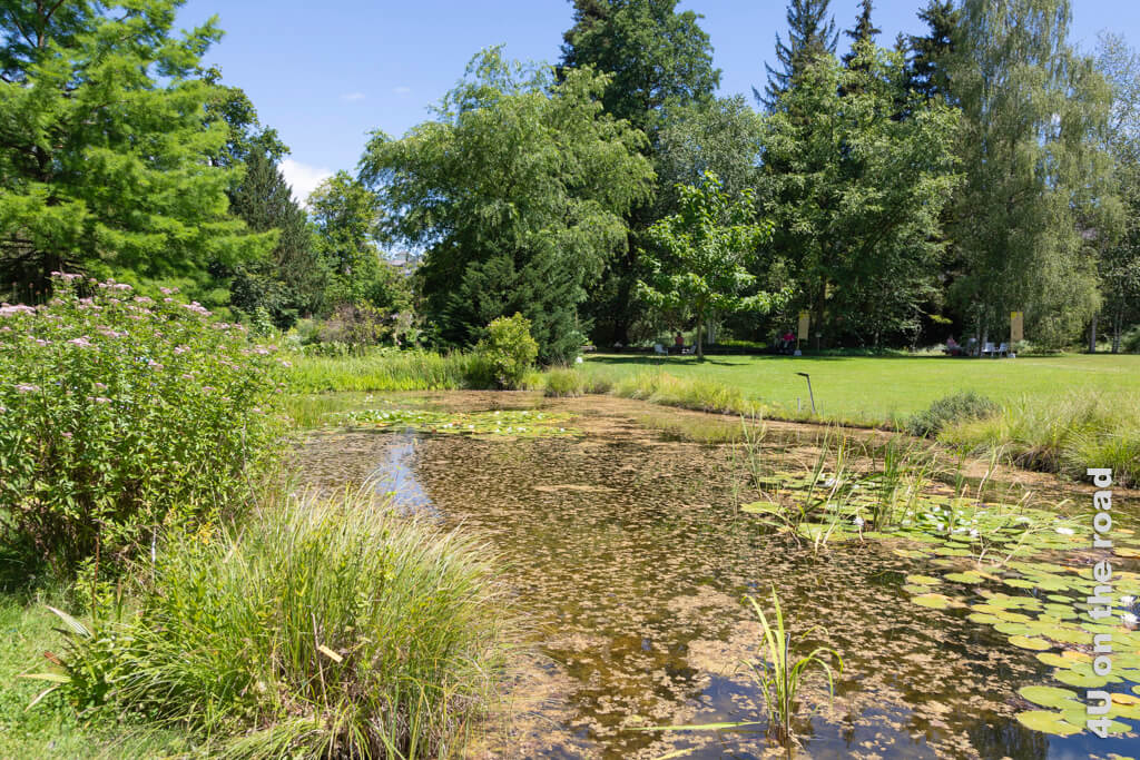 Teichlandschaft im Botanischen Garten Zürich
