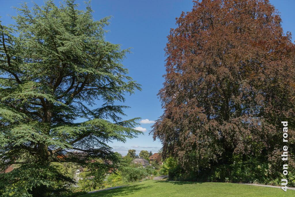Schöne alte Bäume im Botanischen Garten Zürich