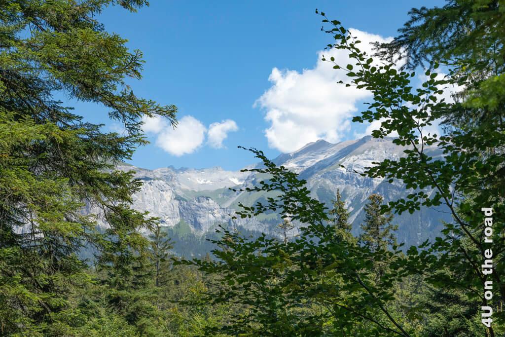 Die Bäume geben erste Ausblicke auf die Bergwelt preis. - Wanderung zur Rheinschlucht