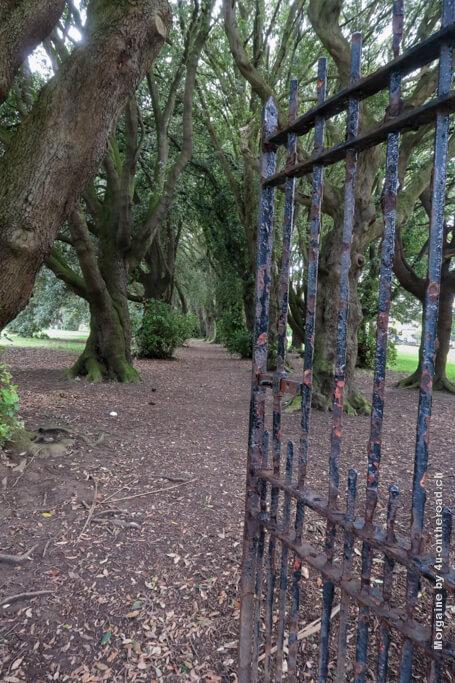 Durch dieses Tor betreten wir einen mystischen Wald - Schnitzeljagd im St. Anne's Park