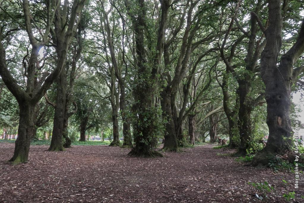 Das könnte ein Wald aus immergrünen Steineichen sein. Wenn man überlegt, wie alt die Bäume dann sein müssen, fragt man sich, was sie wohl schon gesehen haben. Schnitzeljagd im St. Anne's Park